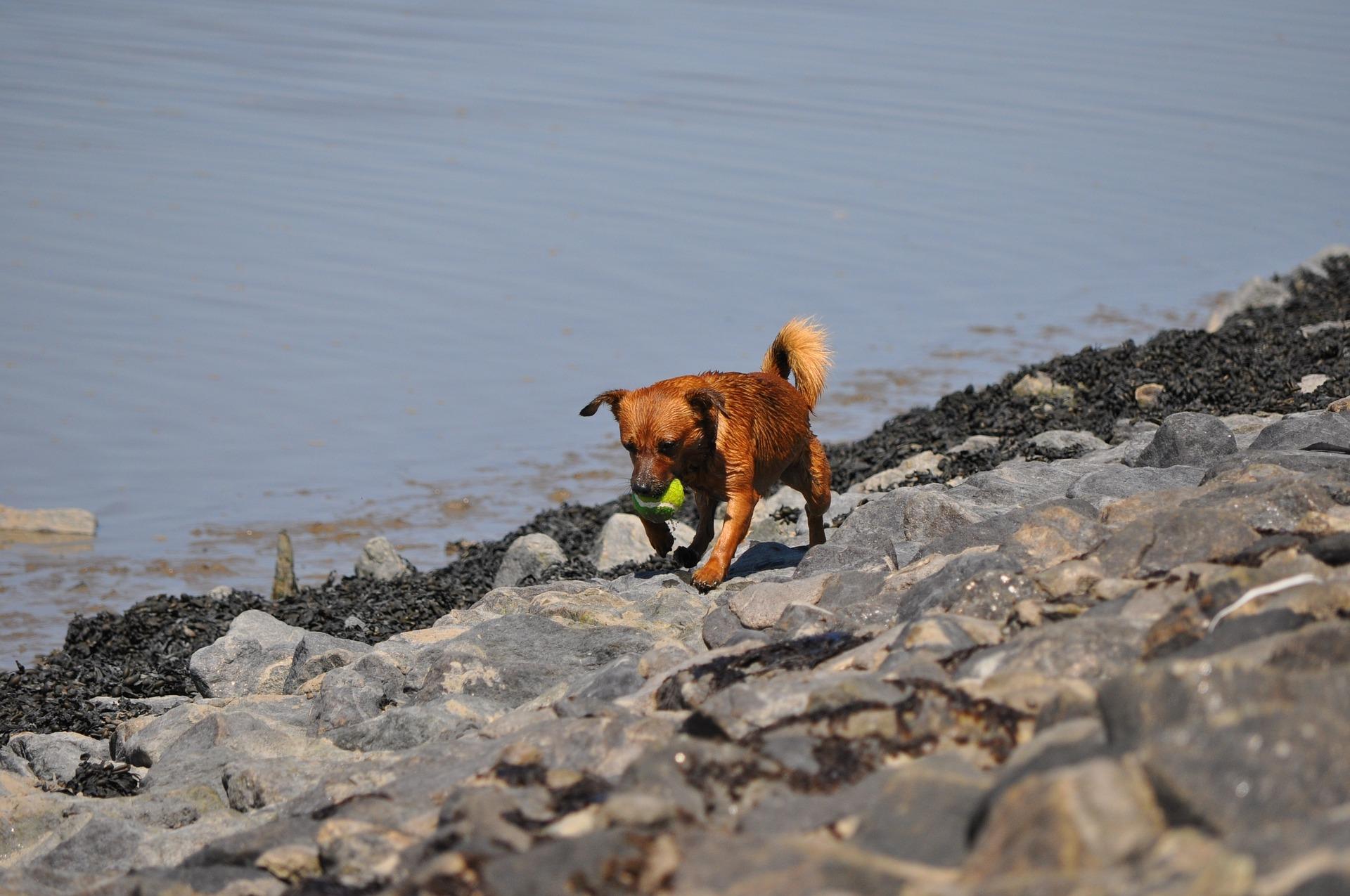 Koiran kouluttaminen ja tärkeät käskyt - koira2014.net